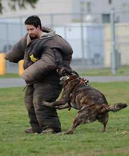 personal-canine-protection-training