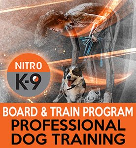 Nitro-K9-Board-and-Train-Program-Professional-Dog-Training