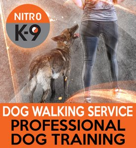 Nitro K9 Dog Walking Service Professional Dog Training