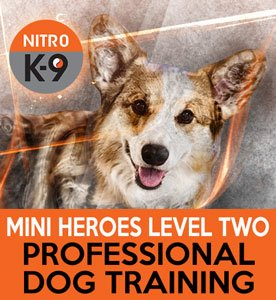 Nitro K9 Mini Heroes Level Two Professional Dog Training